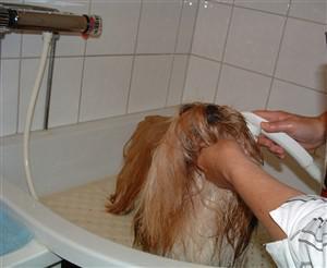 øyebetennelse hund saltvann